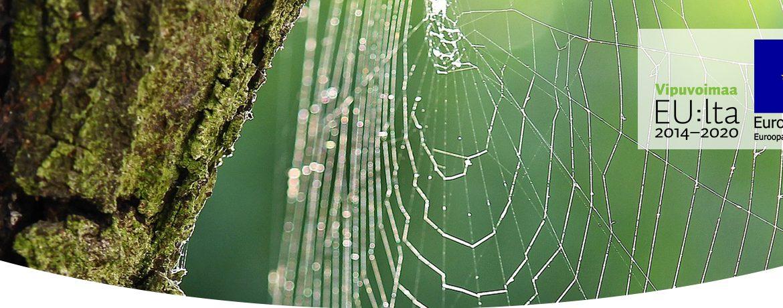 Kuva hämähäkinseitistä ja ESR-hankkeiden logot.